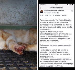 Trappola usata da bracconieri ferisce gravemente un gatto.News3