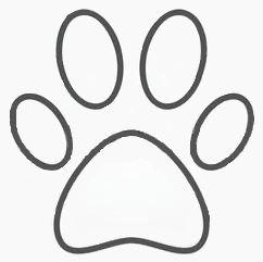 ANIMALI*