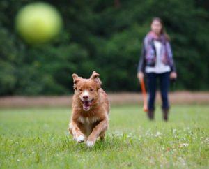 OSTUNI: Aree verdi precluse a cani e padroni-AVC ricorre al TAR