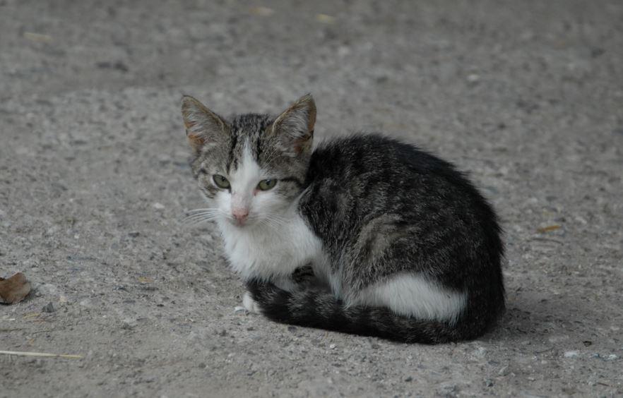 Ragazzi sparano ad un gatto per divertirsi e lo uccidono: silenzio del comune