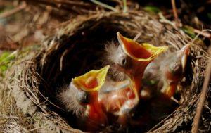 BRAVA GENTE: 18 cacciatori arrestati per traffico internazionale di uccellini da richiamo